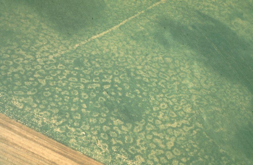 flora-faune-f1-Traces de pergélisol (permafrost)