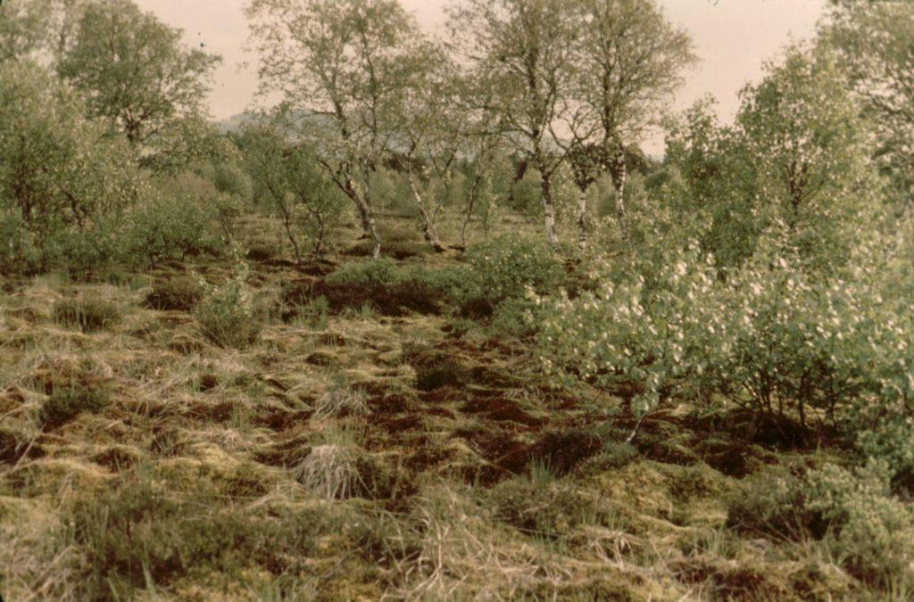 flora-faune-f2-Rabuais